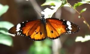 1859 Schmetterling auf Blüte